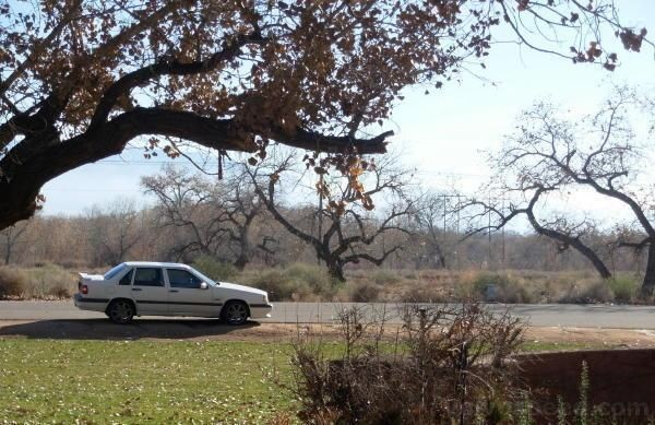 Bosque trees in december! and my car.